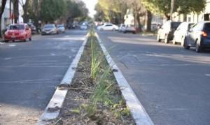 La Plata: Con la llegada de la primavera, plantaron más de 300 dietes en el divisor central de Avenida 25